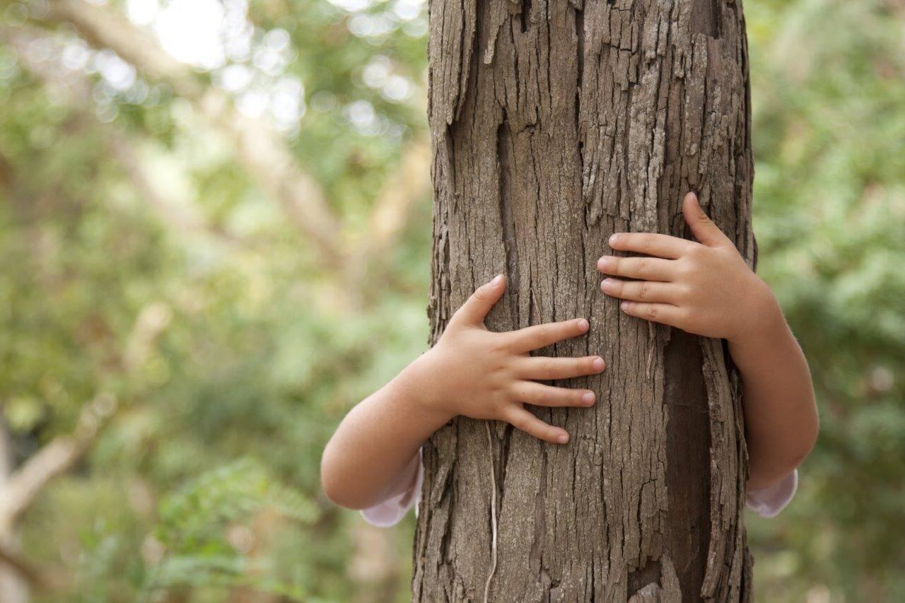 kidforest